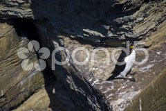 Bird sitting on a rock watching something Stock Photos