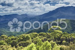 Australia rain forest Stock Photos