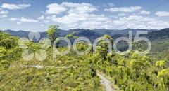 Tasmania rain forest Stock Photos