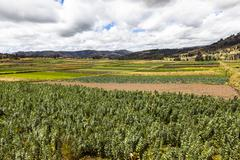 Cultivated fields Stock Photos