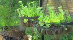 Hanging garden gardens hang up Stock Footage