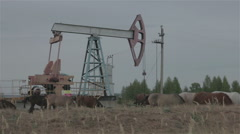 A group of horses is grazed near the oil pump Stock Footage