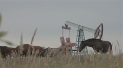 A group of wild horses on the field near oil donkey Stock Footage