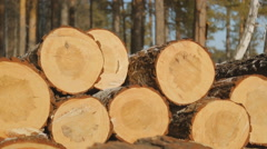 Close up view of sawn timber on sawmill Stock Footage