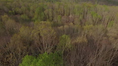 Flying Low Over Spring Forest Stock Footage