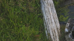 Close up view of small wooden bridge crossing stream Stock Footage