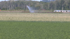 Crops growing in fertile farm land of holland marsh Canada Stock Footage