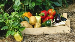 Mixed vegetables in crate from permaculture garden on hay Stock Footage