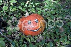 Dekoration für Halloween im Garten Stock Photos