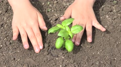 4K Child Hands Planting Seeds in Ground, Seedling Vegetables, Agriculture Field Stock Footage