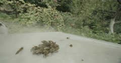 Swarm of bees flies in slow motion Stock Footage