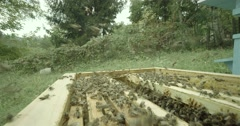 Swarm of bees flying around hive in slow motion Stock Footage