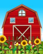 Red barn and sunflower field Stock Illustration