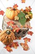 Bunte Herbstdekoration Stock Photos