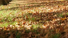 Falling autumn leaves on grass yellow and golden colorful natural background Stock Footage