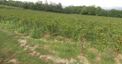 Aerial view Of Vineyards Arranged In Small Plots Stock Footage