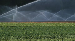 Sprinklers irrigate vegetable fields. Beaverton, Ontario, Canada. Stock Footage