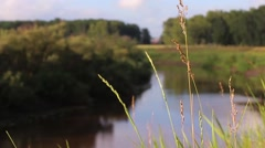 Grass sways in the wind on a background of water Stock Footage