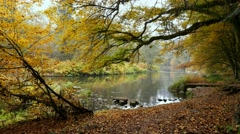 Forest still in Autumn at a river with a little duck Stock Footage
