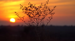 Dry bush swaying in the breeze at sunset Stock Footage