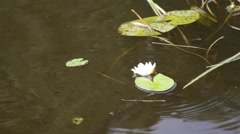 Water-lily Stock Footage