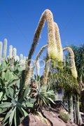 Arc hanging cactus flower Stock Photos