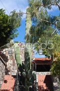 Giant cactus surrounded by stairs Stock Photos