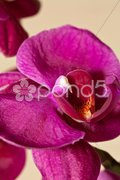 Purple orchid macro in portrait format Stock Photos