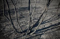 Burned shrubs and scorched earth Stock Photos