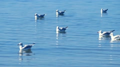 Seagulls swimming in the sea Stock Footage