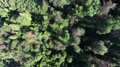Aerial footage over a forest, the shot is moving away from the forest Stock Footage