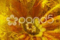 Yellow Primrose bloom with texture Stock Photos