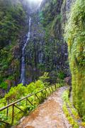 Laurel forest and Irrigation canal. Lewada das 25 fontes and Lewada do Risco  Stock Photos