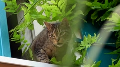 Cat down the stairs from the window into the garden Stock Footage