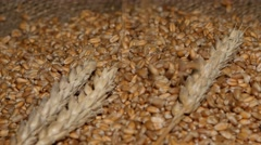 Wheat pouring on top of the grain pile with wheat sheaf on the wood background Stock Footage