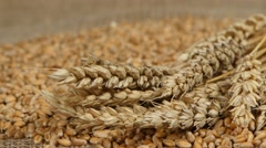 Falling grains of wheat. Close up Stock Footage
