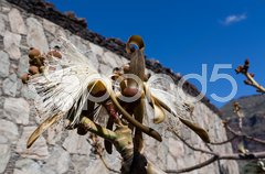 Wilted flower in front of a stone wall and a blue sky Stock Photos