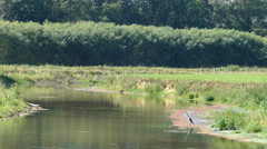 A heron at the canal waiting for fish Stock Footage