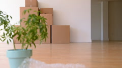 Potted plant and cardboard boxes in empty apartment Stock Footage