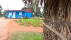 An establishing shot of a farm house on a tobacco farm in Vinales, Cuba. Stock Footage