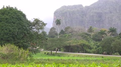 An establishing shot of beautiful Vinales National Park, Cuba. Stock Footage