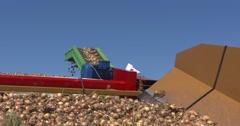 Onion harvest conveyor - low angle Stock Footage