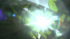 Camera Tracking Through Banana Leaves With Sun Flare Stock Footage