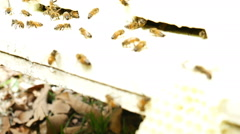Bees fly from beehive Stock Footage