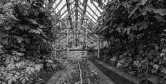 Beautiful old Victorian era greenhouse left ro ruin in old English garden in Stock Photos