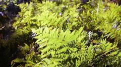 Wind rustling the fern Stock Footage