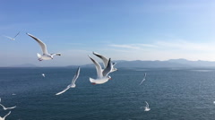 Seagull flying slow motion Stock Footage