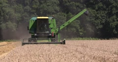 Combine harvester in cornfield - on camera - small scale scenic landscape Stock Footage