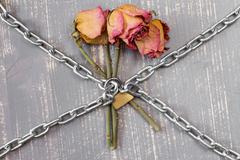 Three chained roses Stock Photos