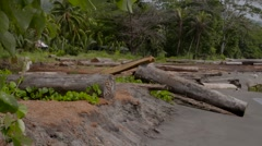 SOLOMON ISLANDS LOGGING POINT Stock Footage